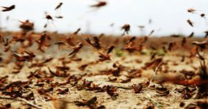 Read more about the article A Plague Of 'Biblical Proportions' Swarms Across The Middle East And Africa