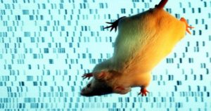 Scientists Made a Mouse That's 4 Percent Human