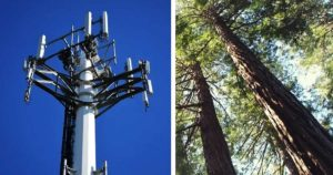 Studies Show Cell Phone Towers Inflict Significant Damage To Trees And Human Health